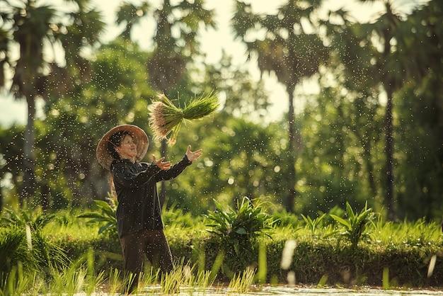 Tajlandia rolnicy sadzą ryż i uprawiają ryż w porze deszczowej