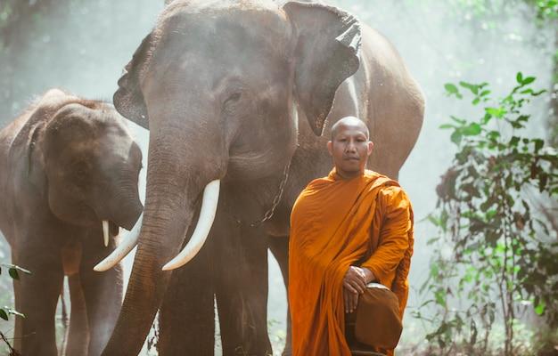 Tajlandzcy mnisi chodzi w dżungli z słoniami
