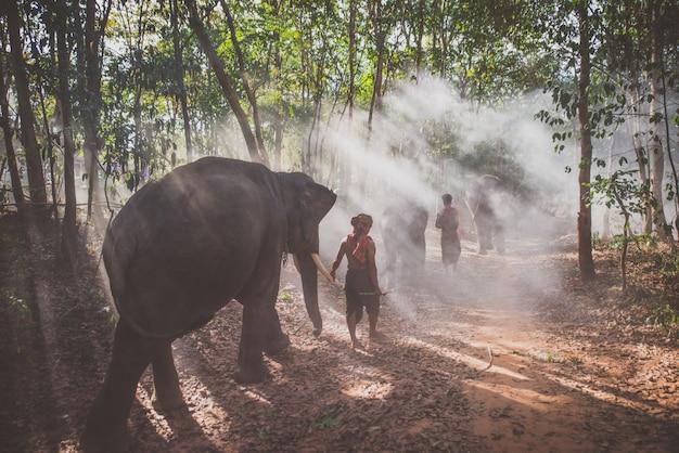 Tajlandzcy pasterze w dżungli ze słoniami. historyczne momenty życia z kultury tajlandii