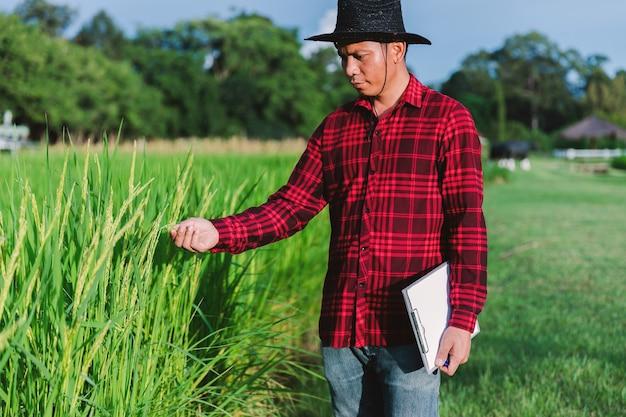 Tajlandzcy rolnicy kontrolujący pola ryżowe na polach