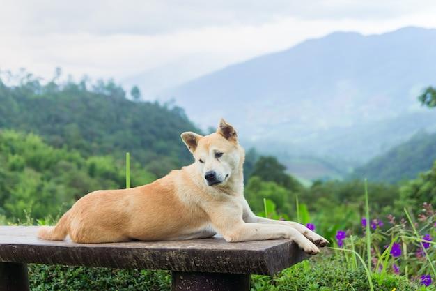 Tajlandzki brązu pies z mgły i góry tłem