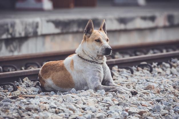 Tajlandzki psi odpoczywać na grunge betonu podłoga.