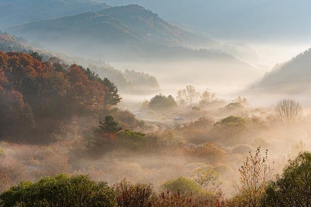 Tajny ogród inje-gun, mgła i wschód słońca, republika korei