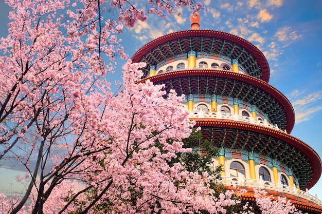 Tajwańska sakura