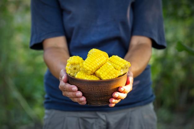 Talerz kukurydzy w rękach kobiety rolnika