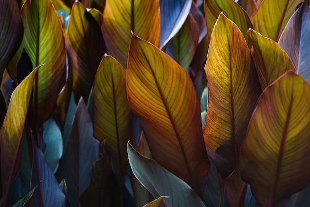 Talerze liści canna x generalis pomalowane na ciemny fiolet