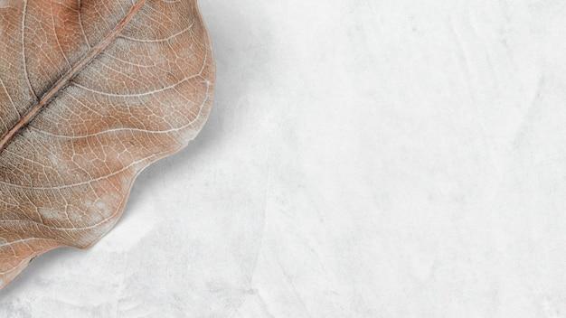 Tapeta i tło w kolorze ziemi botanicznej