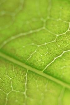 Tapeta na pulpit tropikalnych drzew leśnych tekstury