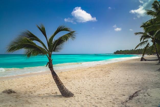 Tapeta tło wakacje letnie wakacje