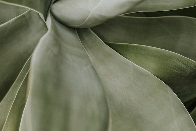 Tapeta w tle soczystych roślin, estetyczny ciemny obraz natury