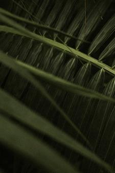 Tapeta w tle z ciemnym liściem, estetyczny obraz full hd
