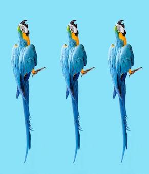 Tapeta z papugami ara foto nowoczesny wzór na kolorowym tle