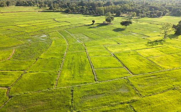 Taras ryżowy widok z lotu ptaka. obraz pięknego tarasu pola ryżowego. widok z góry