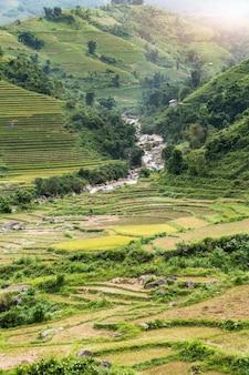 Tarasowaty rice pole po żniwa na górze w sapa, wietnam