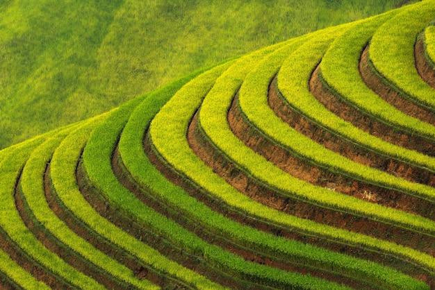 Tarasowaty ryżowy pola ryżowego krajobraz mu cang chai