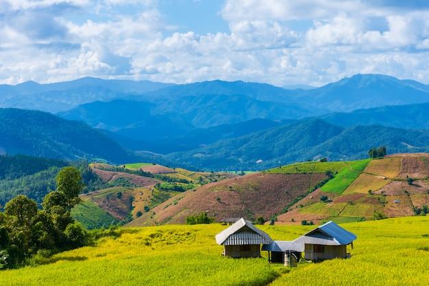Tarasowaty złoty ryżowy pole z niebem.