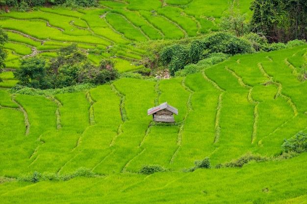 Tarasowe pole ryżowe w mae cham chiangmai w północnej tajlandii