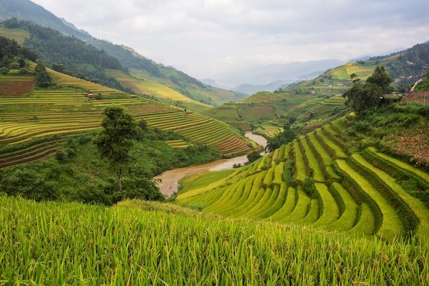 Tarasowy krajobraz pola ryżowego mu cang chai, yenbai, północny wietnam