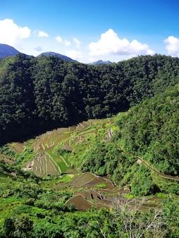 Tarasy ryżowe w bangaan na filipinach