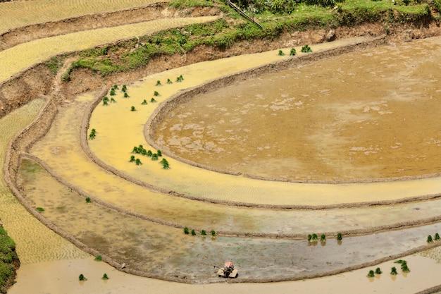 Tarasy ryżowe. w pobliżu sapa, mui ne