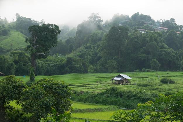 Tarasy ryżowe z małym domkiem
