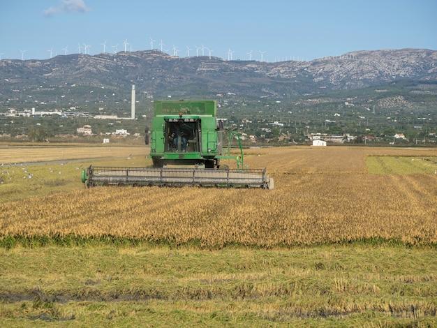 Tarragona hiszpania 10132020 kombajn zbożowy zbierający dojrzałe pole ryżowe koncepcja rolnictwa