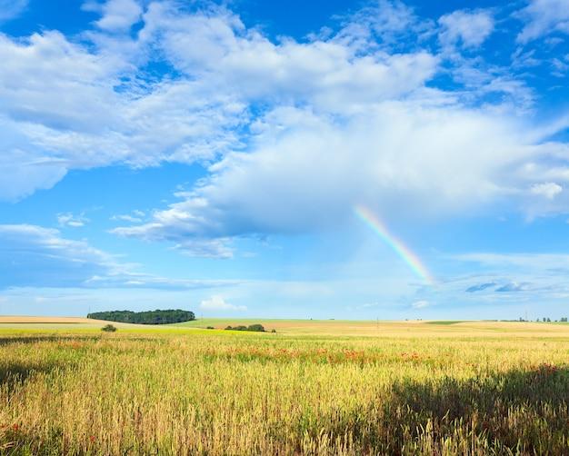 Tęcza w błękitne pochmurne niebo nad polem pszenicy letniej.
