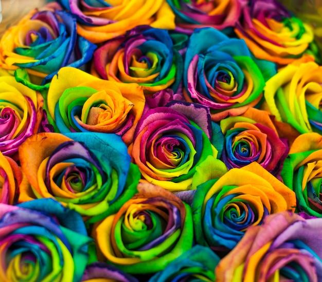 Tęczowe róże