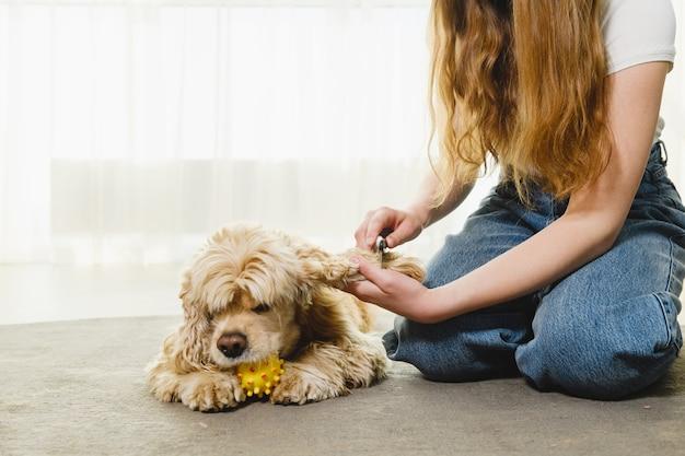 Teen dziewczyna siedzi na dywanie i gra z cocker spanielem w okresie izolacji. dziewczyna czesanie sierści psa.