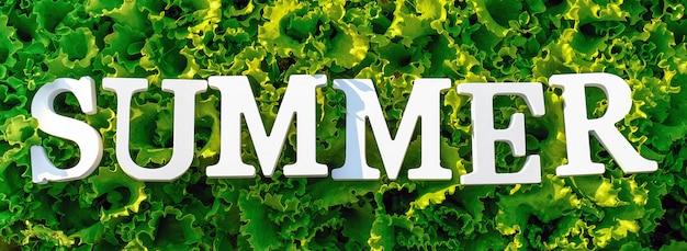 Tekst lato z białych liter na kręconej zielonej sałacie. koncepcja letniej diety, czas detoksykacji, zdrowe jedzenie. widok z góry baner