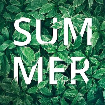 Tekst lato z tłem zielonych liści