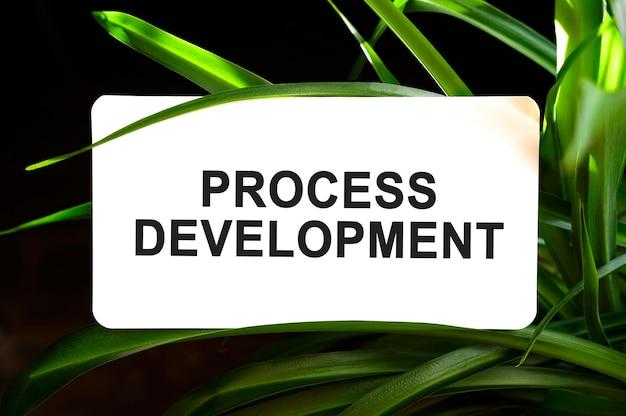 Tekst rozwoju procesu na białym tle otoczony zielonymi liśćmi