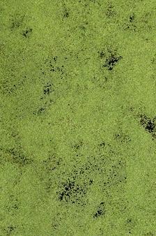 Tekstura bagienna woda kropkująca z zieloną rzęsą i bagno roślinnością