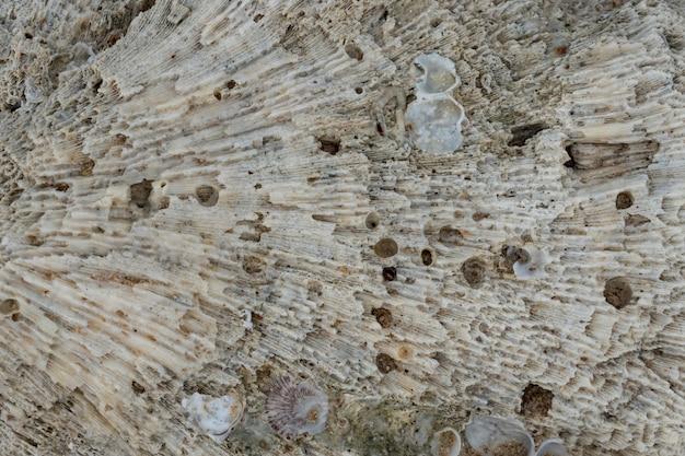 Tekstura biały koral