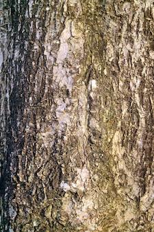 Tekstura dojrzałej kory szorstkiej drzewa na abstrakcyjne tło