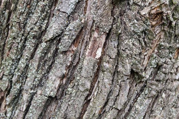 Tekstura kory drzewa. tło drewna