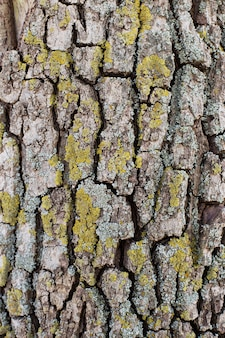 Tekstura kory drzewa