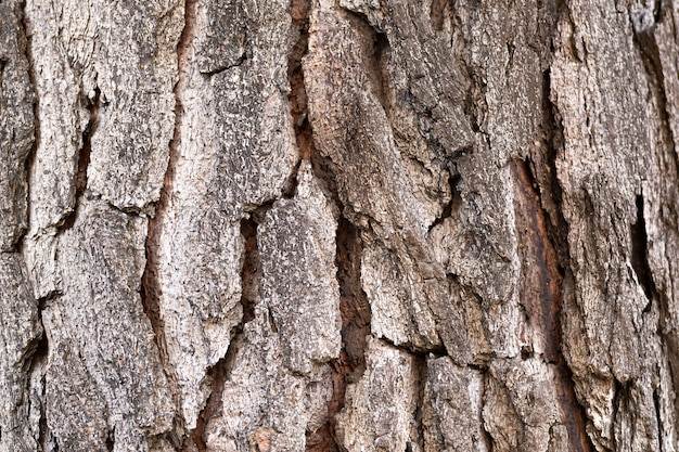 Tekstura kory na pniu drzewa