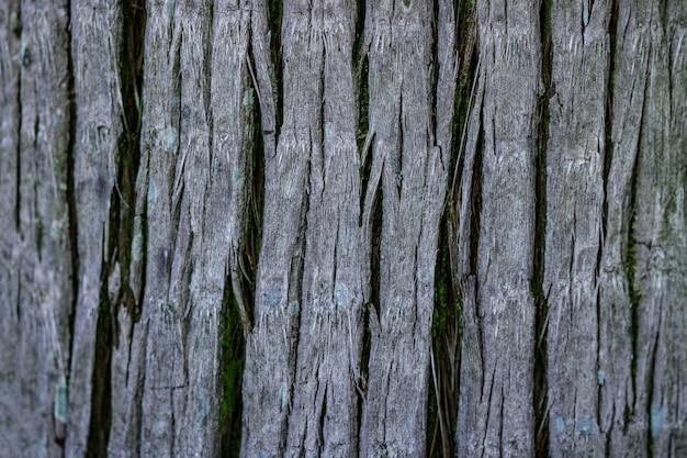 Tekstura kory palmy. tapeta tropikalnych drzew