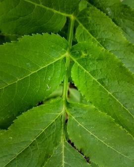 Tekstura liść