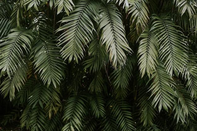 Tekstura liści palmy - idealna na tapetę lub tło