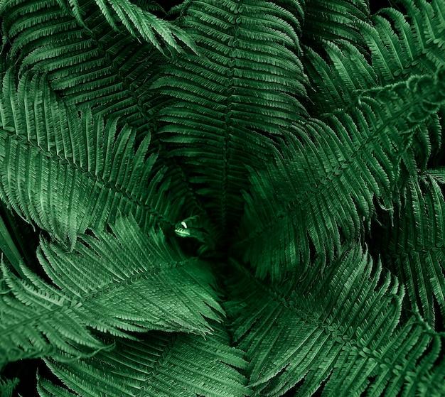 Tekstura liści paproci w dramatycznej atmosferze nocy