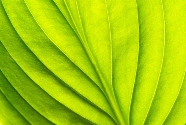 Tekstura liścia jako powierzchnia