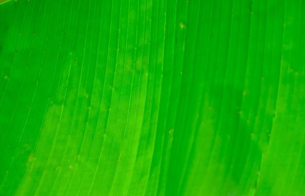 Tekstura liścia palmy. tekstura liścia drzewa tropikalnego.