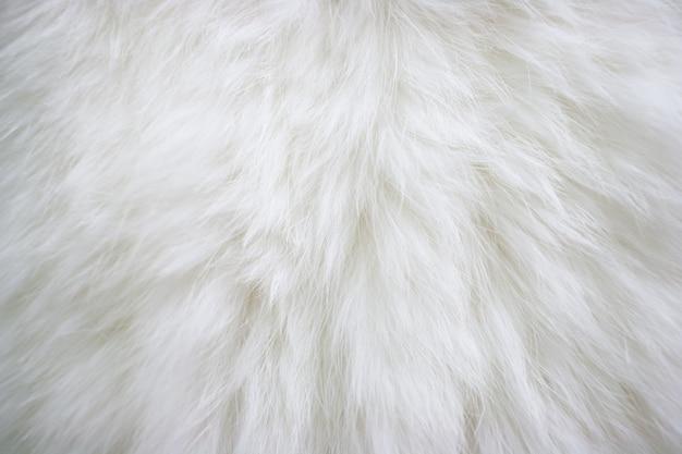 Tekstura naturalnego długowłosego białego futra.