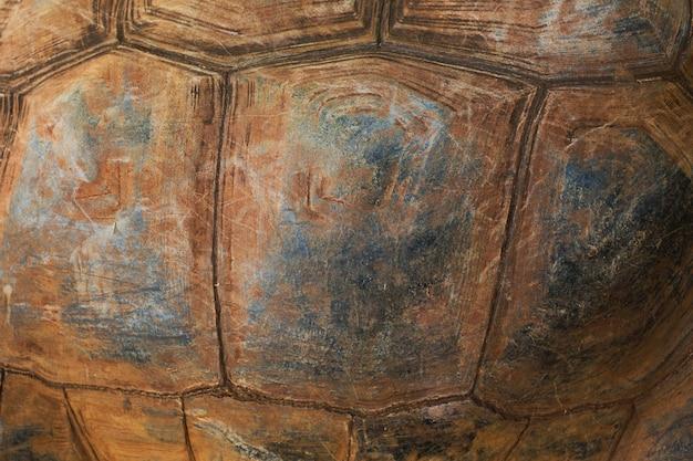 Tekstura pancerza żółwia.