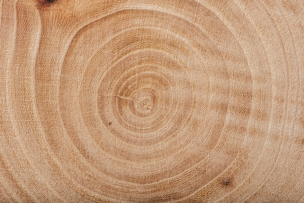 Tekstura płyty drewna jesionowego z rocznymi słojami, tłem lub tapetą.