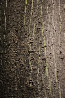 Tekstura pnia drzewa z bliska