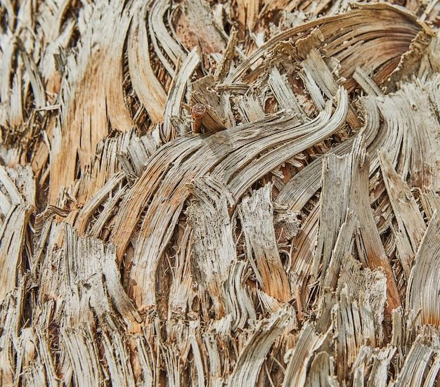 Tekstura pnia palmy rosnącej na tle wybrzeża.