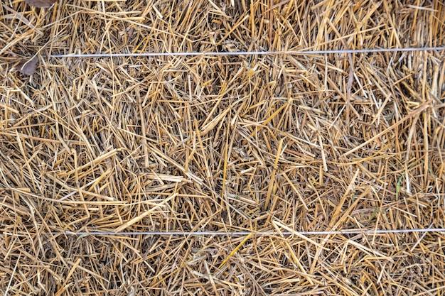 Tekstura siana. widok z przodu beli siana jako gospodarstwa rolnego i rolniczego symbolu czasu żniw z suszoną słomą z trawy jako dzianego wiązanego stogu siana. święto szawuot, żniwa, tło siana.